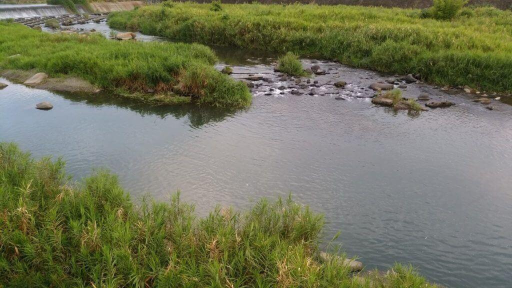 川 オヤニラミ