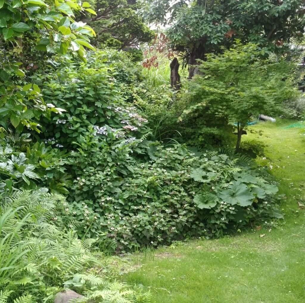 ビオトープのある庭