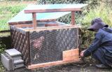 ニワトリ小屋を作ろう!①~ニワトリの飼い方