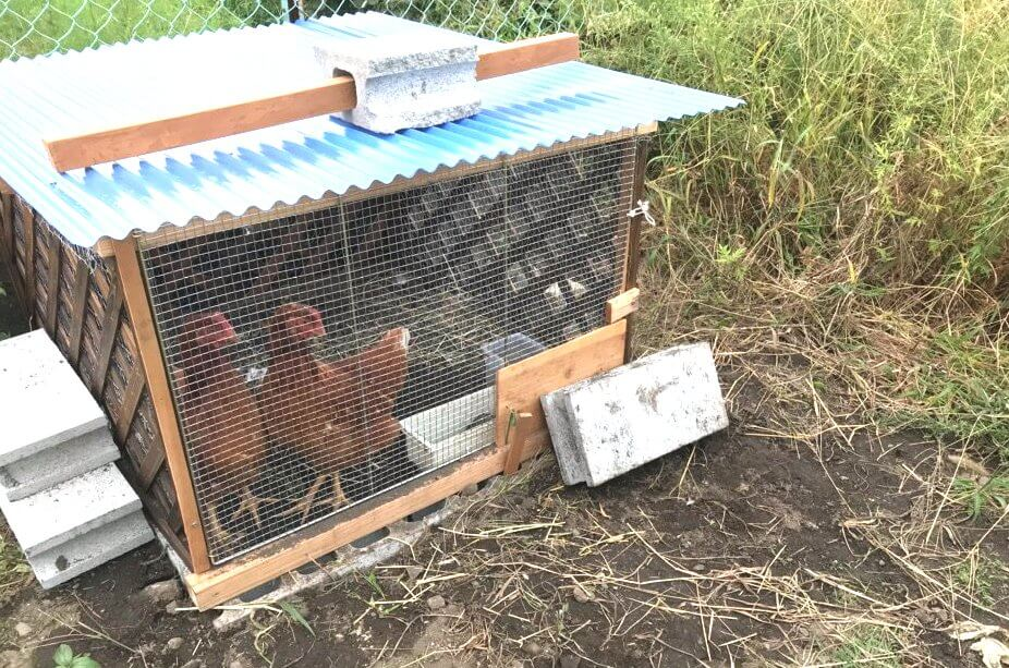 鶏 ニワトリ 小屋