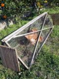 チキントラクターの作り方~ニワトリの飼い方