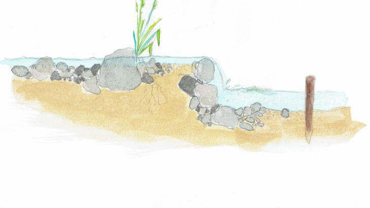 ⑦循環でビオトープの生態系を豊かに