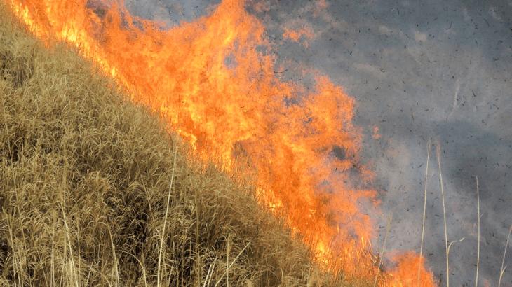 大きな火のコントロールを野焼きに学ぶ