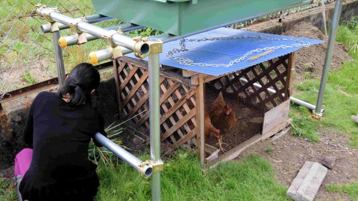 ニワトリ夏の飼い方~水田緑化屋根