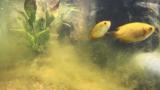 屋外で熱帯魚を飼おう⑤~水中の様子
