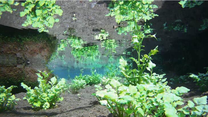湧水群の水中