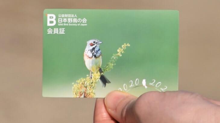 日本野鳥の会に入ろう